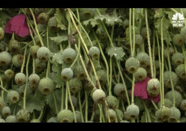 http://www.nbcnews.com/storyline/americas-heroin-epidemic/500-million-opium-poppy-field-discovered-north-carolina-n764801