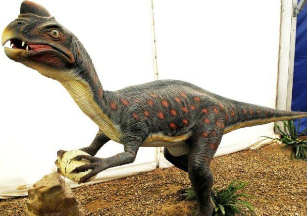 https://commons.wikimedia.org/wiki/File:Dinosaurios_Park,_Oviraptor.JPG